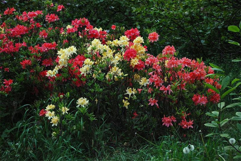 Живые букеты цветов