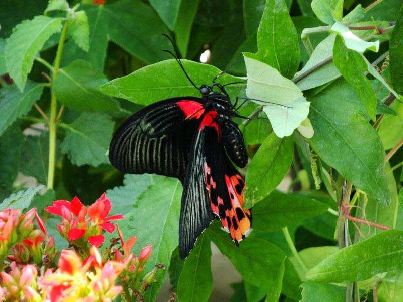 Бабочка в теплице