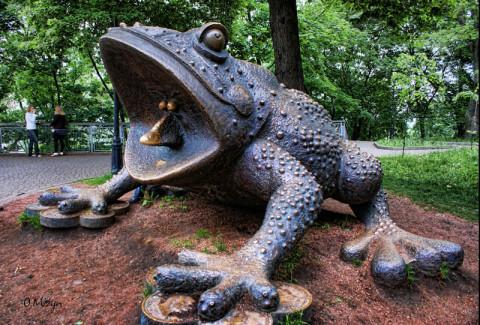 Жаба в Крещатом парке