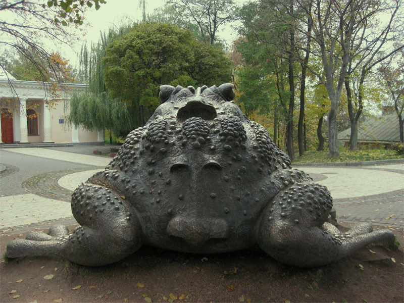 Жаба сзади