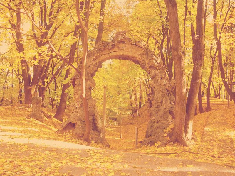 Парадная арка в парке