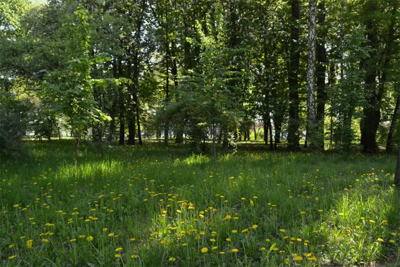 Лужайка в парке