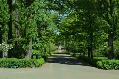 Аллея к памятнику Примакову