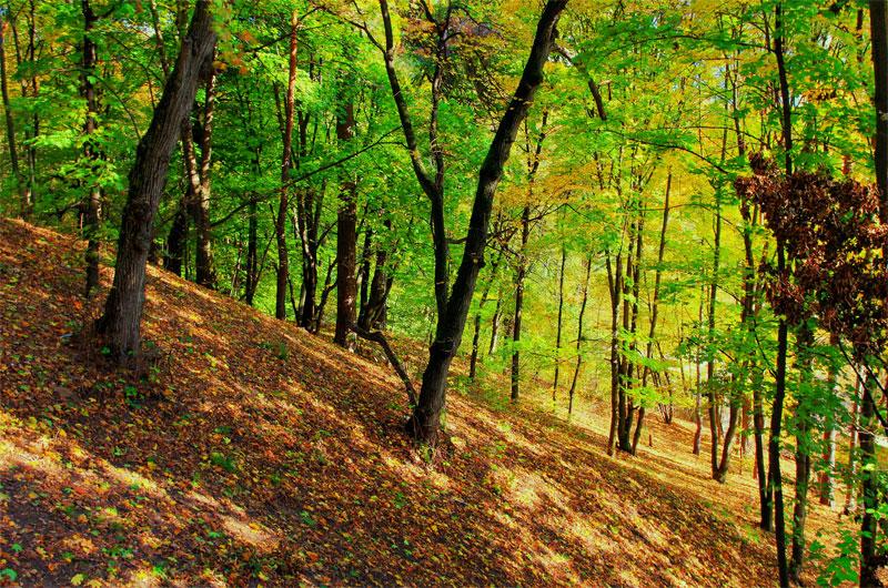 Осень в Сырецкой роще