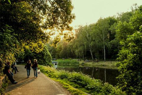 Парк Нивки летом