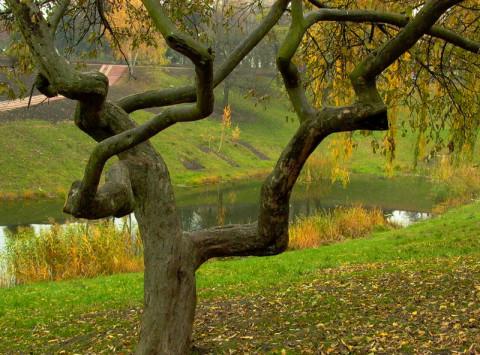 Причудливое дерево