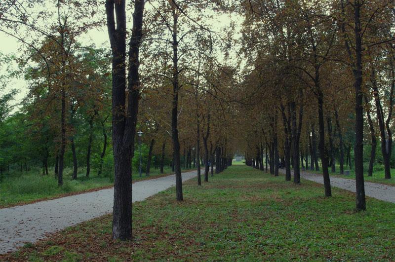 Аллея вглубь парка