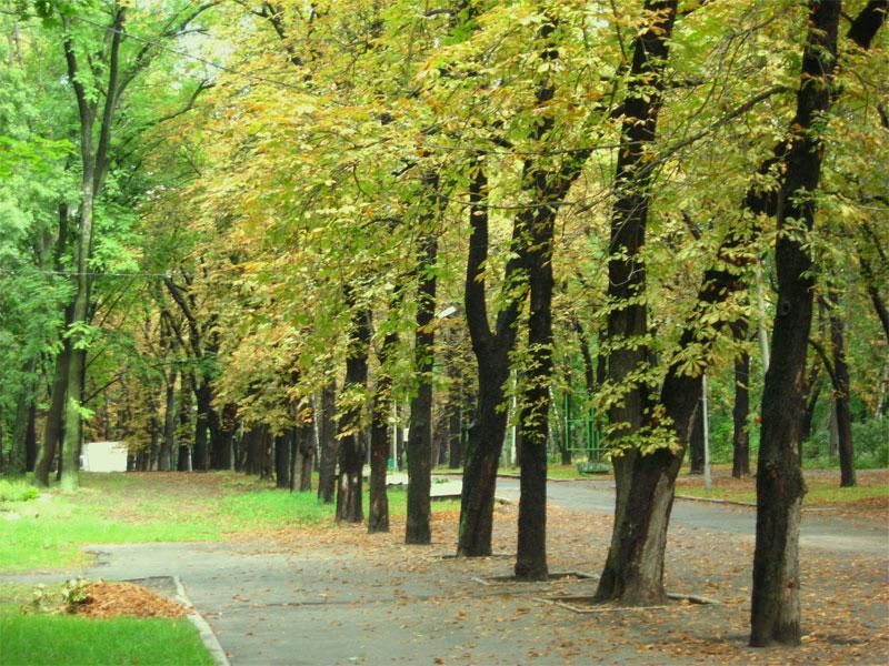 Осень в парке Пушкина