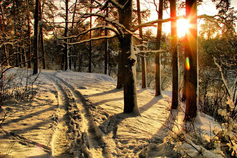 Пуща-Водица зимой