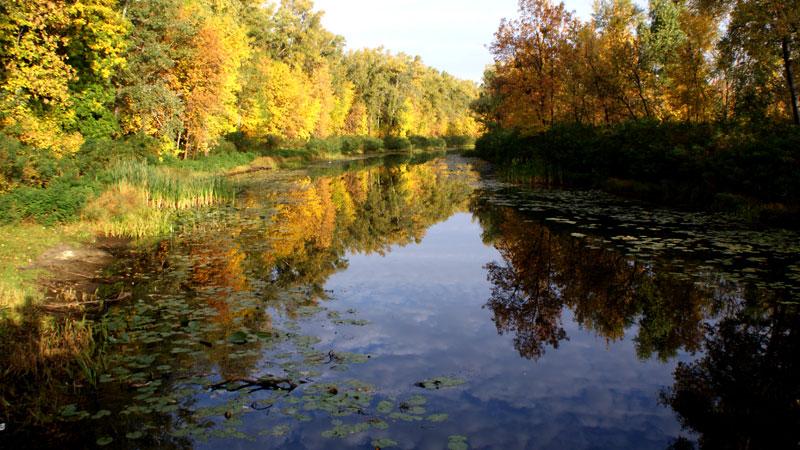 Осень на Трухановом