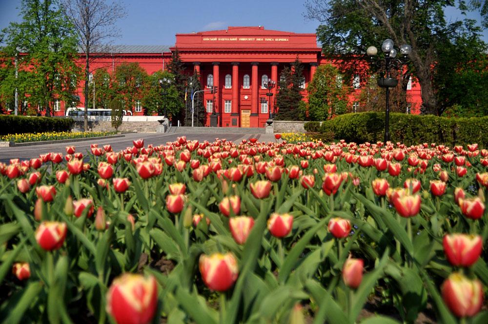 Клумбы в парке напротив университета