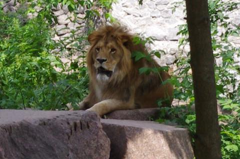 Царь зверей